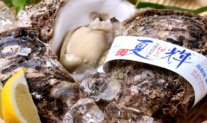 Tottori's rock oysters are delicious during summer.It is a large one with a length of 20 cm.